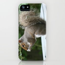 Visiting Squirrel Luncheon (Photography: Critters and Creatures) iPhone Case