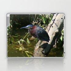 Green Heron Laptop & iPad Skin