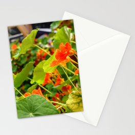 Nasturtiums galore Stationery Cards
