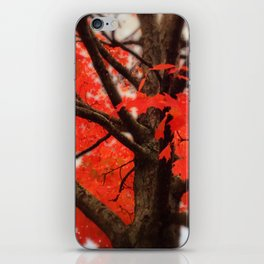 Red Maple Tree - 2013 iPhone Skin