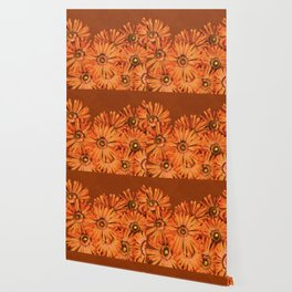 Orange succulent flowers close-up Wallpaper
