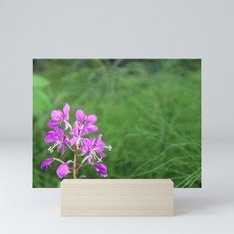 Fireweed Wildflower Mini Art Print