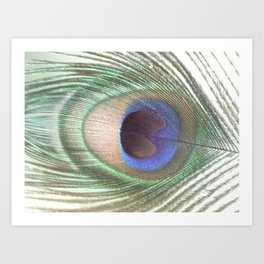 PEACOCK FEATHER II Art Print