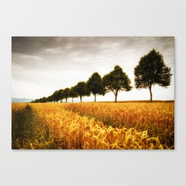 Golden grain field and trees in summer Canvas Print