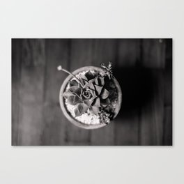 Black and White Succulent Canvas Print