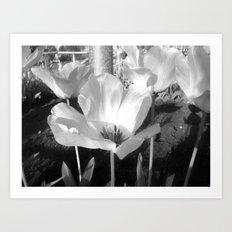 Moonflower Art Print