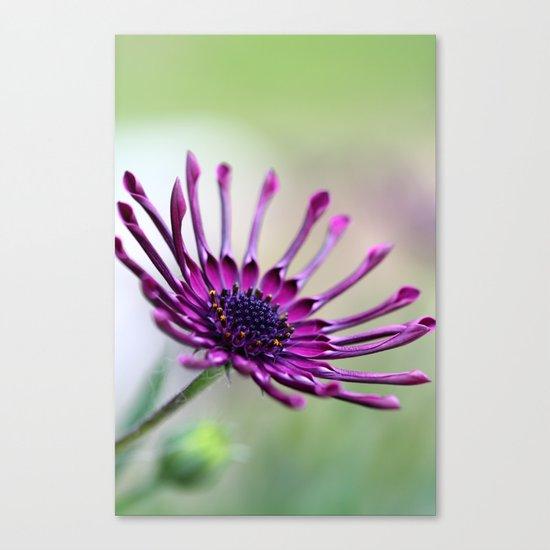 vibrant purple flower Canvas Print