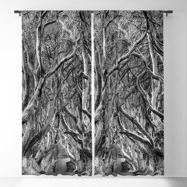 Avenue of trees Blackout Curtain