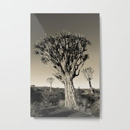 Quiver Tree in Garas II Metal Print