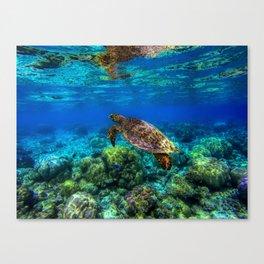 Undersea Tropical Turtle Coral Canvas Print