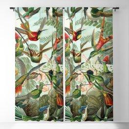 Vintage Hummingbirds Decorative Illustration Blackout Curtain