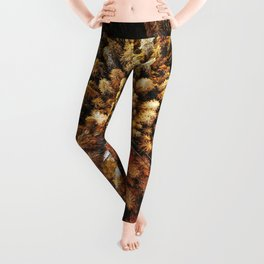 autumnal forest with winding road Leggings