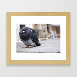 Mr Pigeon Framed Art Print