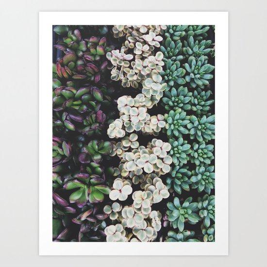 Succulent (4) Art Print
