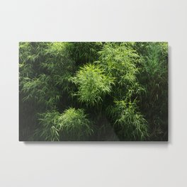 Green Bamboo Grove Tropical Plants Metal Print