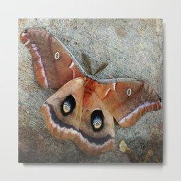 Polyphemus Moth Metal Print