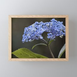 Hydrangea in Blue Framed Mini Art Print