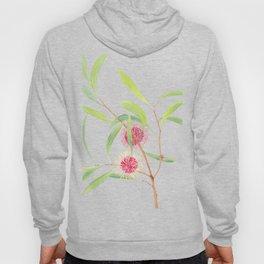 Pincushion Hakea (Hakea Laurina) watercolour; Australian flower Hoody
