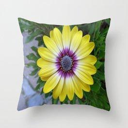 Pretty as Sunshine Throw Pillow