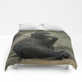 Celebes Crested Macaque Youngster Comforters