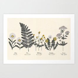 Botany .01 Art Print