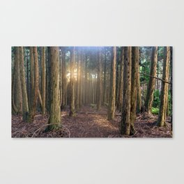 Polipoli's Enchanted Forest Canvas Print