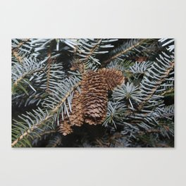 Spruce Cones And Branches Canvas Print