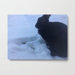 snow bunny rex Metal Print