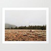 elk Art Prints featuring Elk.  by Joe Greer