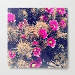 flowering cactus, scottsdale, arizona Metal Print