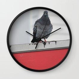 Staring Bird Wall Clock