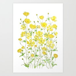 yellow buttercup flowers filed watercolor  Art Print
