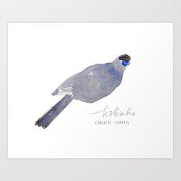 Kōkako watercolor Art Print