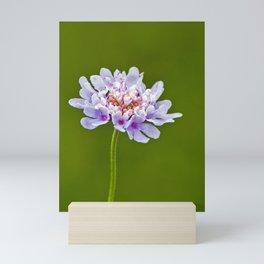 Pincushion Flower Mini Art Print
