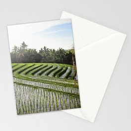 rice paddy at dawn Stationery Cards