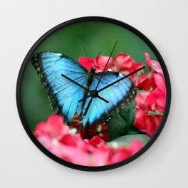 Peek-A-Blue Butterfly Wall Clock