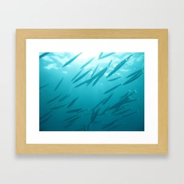 Barracuda Framed Art Print