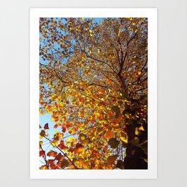 Morning Walk: Look Up Art Print