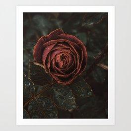 Rose Gold Art Print