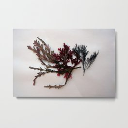red algae Metal Print
