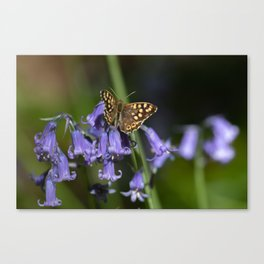 Butterfly on Bluebells Canvas Print