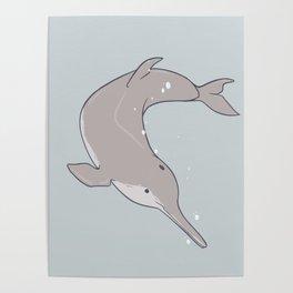 Baiji Dolphin Poster