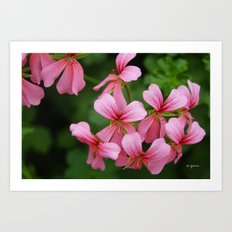 Pink Flowers Photography Art Print