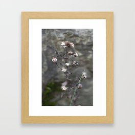 faded flowers 2 Framed Art Print