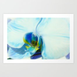 Blue Orchid II Art Print