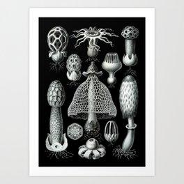 Ernst Haeckel - Basimycetes (Mushrooms) Art Print