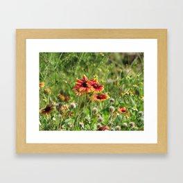 Blanket Flowers Framed Art Print