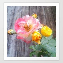 Colorful Rose Art Print
