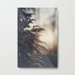 Winter Morn Metal Print