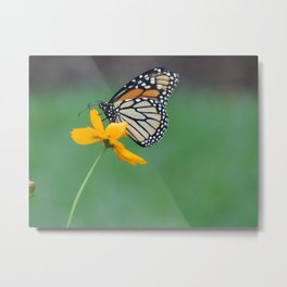 the monarch and the wildflower Metal Print